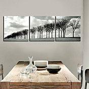 Strakt lærred Art Landskab Line of Trees Sæt ... – DKK kr. 364