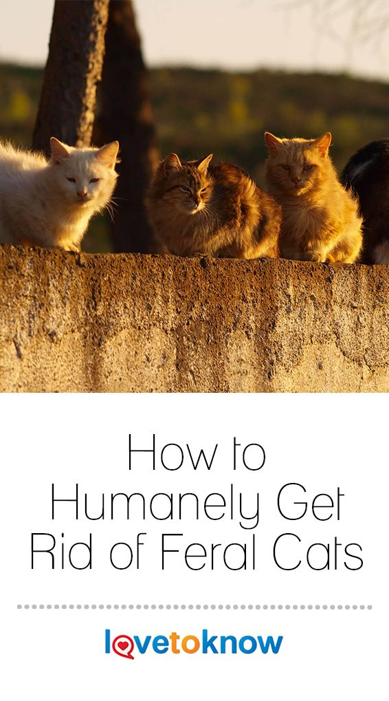 How To Humanely Get Rid Of Feral Cats With Images Feral Cats Cat Nutrition Cat Has Fleas