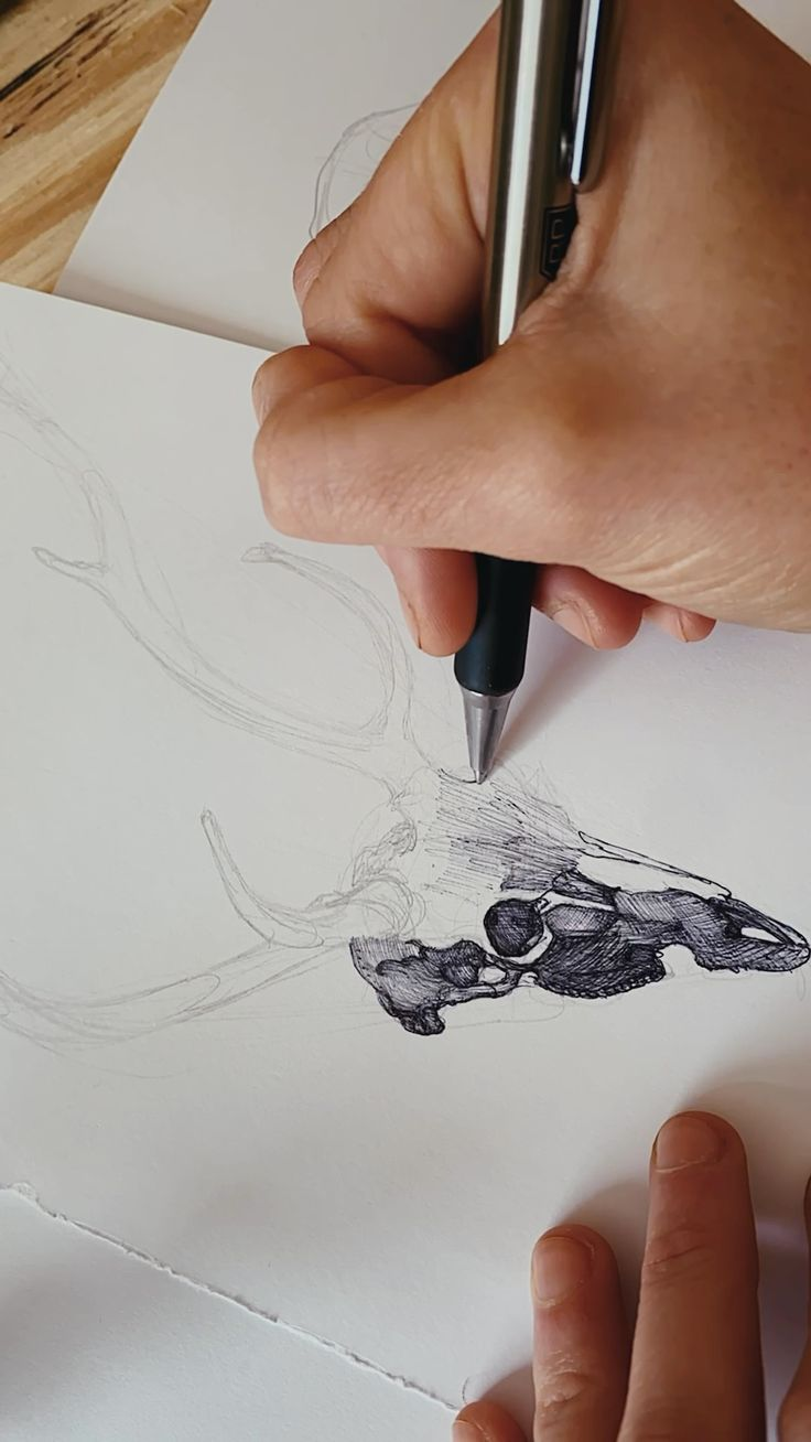 Deer Skulls, Beautiful Pictures, Sketches, Cool Stuff, Studio, Drawings, Artist, Pretty Pictures, Artists