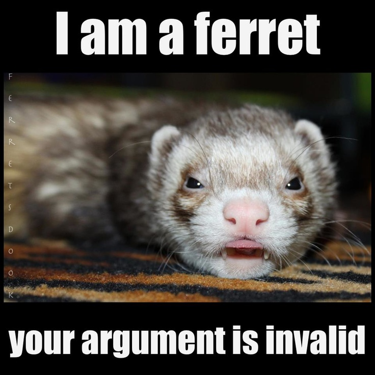 pin ferret meme on - photo #19