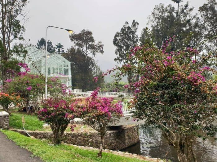 Kebun Raya Cibodas Photo