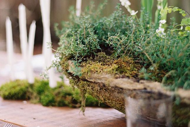 Forest Fun  18 Ways to Throw an Enchanted Woodland Party via Brit   Co