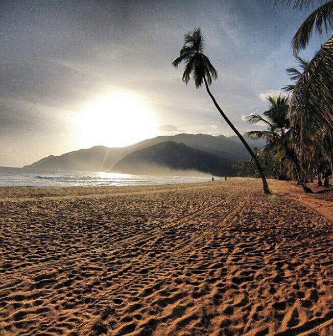 Amanecer en Playa Grande @choroni_vzla