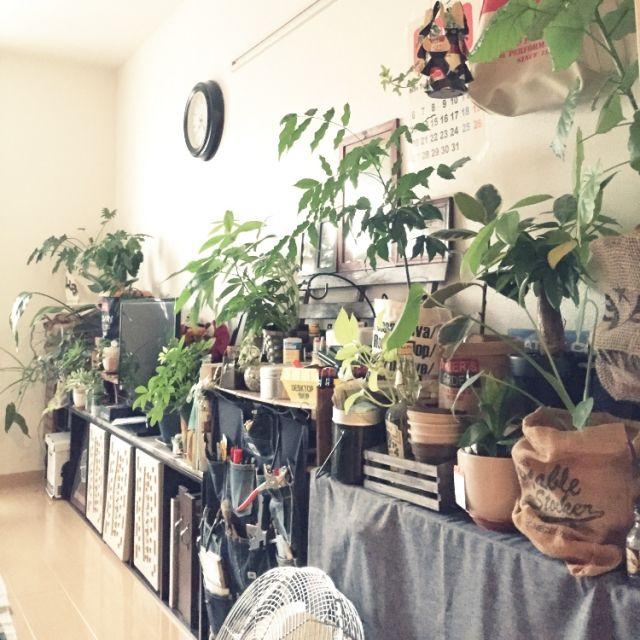 ウォールポケット/カラーボックス/コーヒーの木/ジャックと豆の木/鉢カバー…などのインテリア実例 - 2015-07-25 08:24:55 | RoomClip(ルームクリップ)