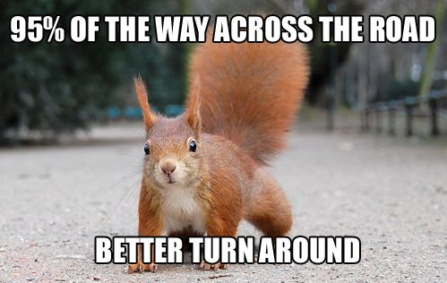 totallyThe Roads, Laugh, Little Red, Stuff, Nature Pictures, Funny Pictures, Red Squirrels, Humor, Animal
