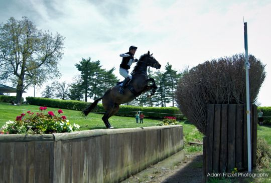 William Fox-Pitt & Bay My Hero at the '14 Roelx Kentucky Three Day Event