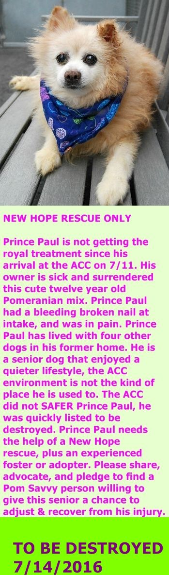 SAFE 7-14-2016 by  Imagine Pet Rescue --- SUPER URGENT Manhattan Center PRINCE PAUL – A1080856  MALE, TAN / WHITE, POMERANIAN MIX, 12 yrs OWNER SUR – ONHOLDHERE, HOLD FOR ID Reason OWNER SICK Intake condition UNSPECIFIE Intake Date 07/11/2016 http://nycdogs.urgentpodr.org/prince-paul-a1080856/