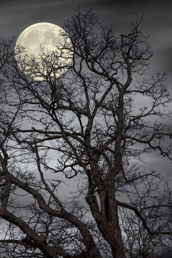 ✯ Treetop Moon