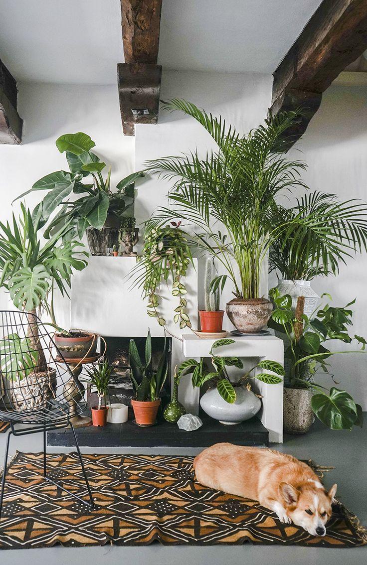 Urban jungle woonkamer met corgi