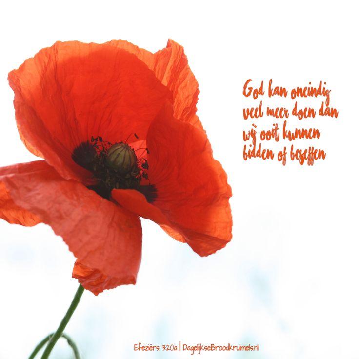 God kan oneindig veel meer doen dan wij ooit kunnen bidden of beseffen. Efeziërs 3:20a
