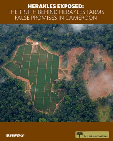 Herakles Exposed: The Truth Behind Herakles Farms False Promises in Cameroon (press release). Internal Documents Reveal New York Corporation Deceiving Investors and Communities in Troubled Africa Palm-Oil Project