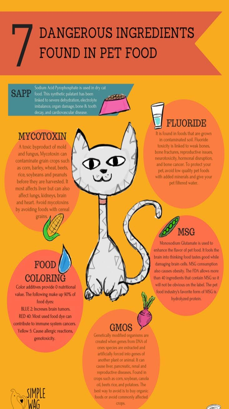 Ingredients In Cat Food That Are Harmful For Your Cat Cat Guides Food Animals Homemade Cat Food Dangerous Ingredients
