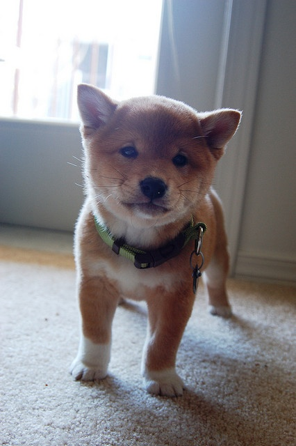 i die!! & it's name is mango. how adorable.