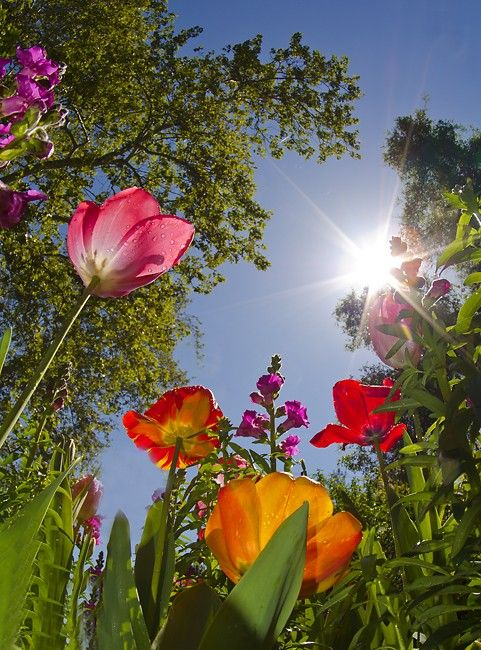 """""""Hello Springtime.  Please come soon!""""  Love this perspective..."""