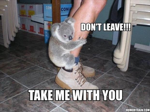 I used to have a little stuffed koala that held onto my finger like this!