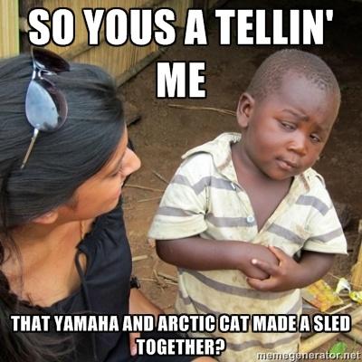 Yamacat