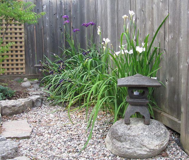 Japanese Iris In Meditation Garden By JP Newell, Via Flickr