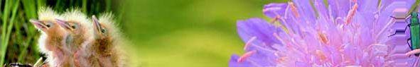 Argile blanche (Peau sèche et Sensible) - Arôma essentiel
