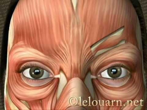 La toxine botulique - Le Louarn