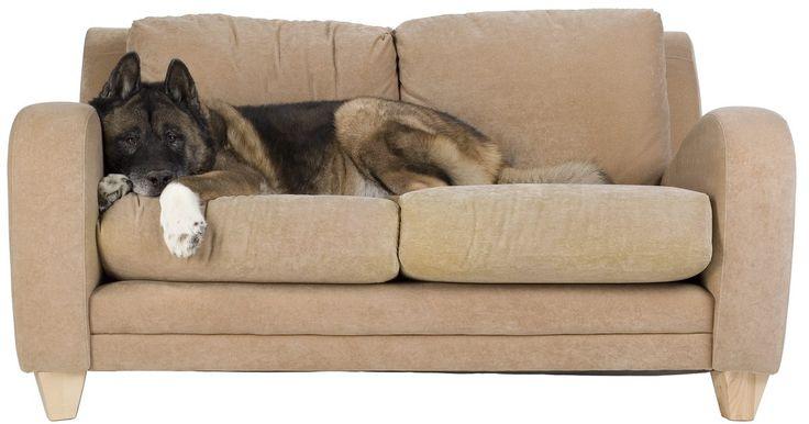 Qual o custo de limpar um sofá à vapor?. O sofá é o móvel com mais tráfego de gente em qualquer casa, por isso, ele precisa ser limpo regularmente. Embora uma mancha ocasional possa ser removida com um tratamento local, se você limpar profundamente o seu sofá, será necessário utilizar um limpa-manchas. Felizmente, a limpeza à vapor não costuma ser cara e elimina tanto os maus odores ...