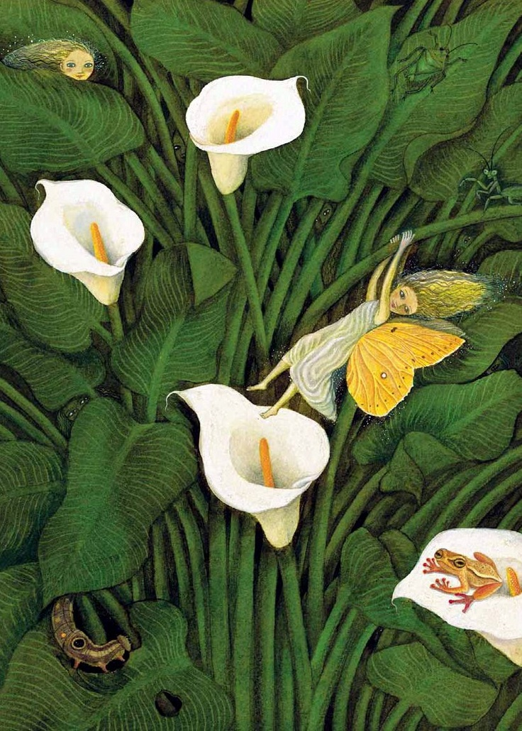 Diego Rivera, Fynbos Fairy in Calla Lillies