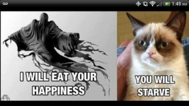110 best images about Grumpy Cat on Pinterest | Grumpy cat ...