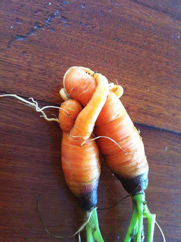 Vegansexual love can be humble as carrots. #vegansexuals