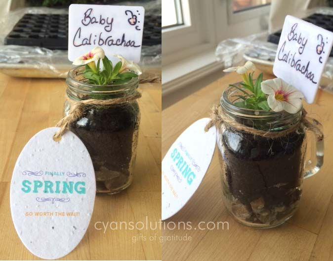 In a little tiny mason jar/mug, we inserted a baby calibrachoa (also called a million bells) and delivered them to clients as our springtime thank you.  Attached is our tag printed on seed paper so you can plant that too! Fun #cyanspring #giftsofgratitude #ottawa #marketing