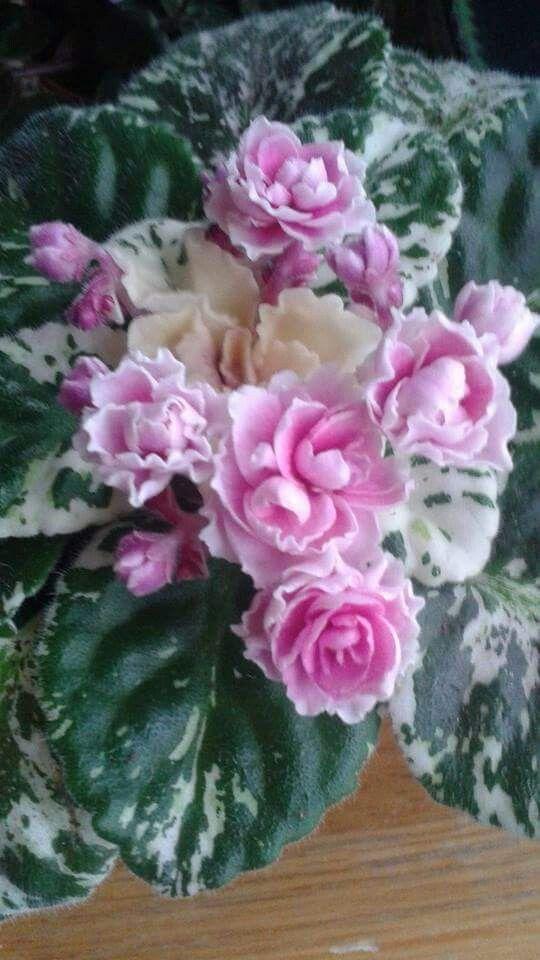 Rose Bouquet AV 9028.      4/12/2001