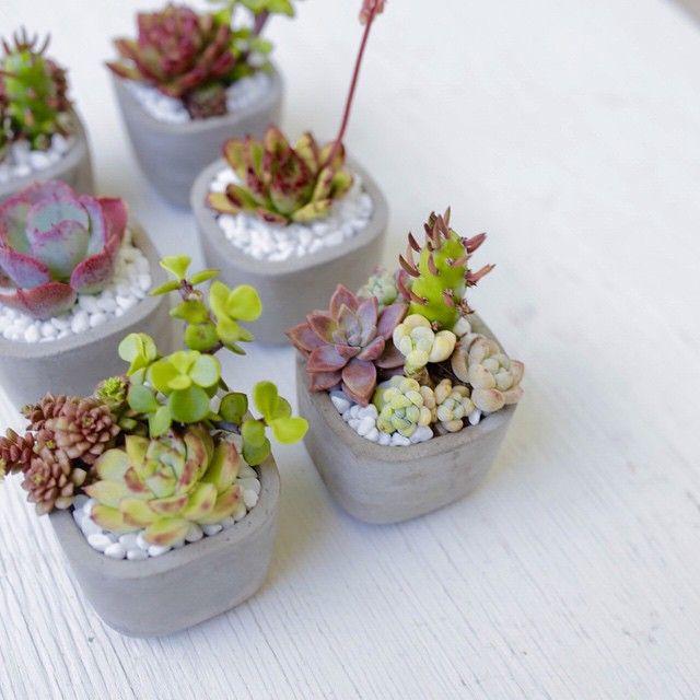 """Succulent mini arrangements make for great favors!"