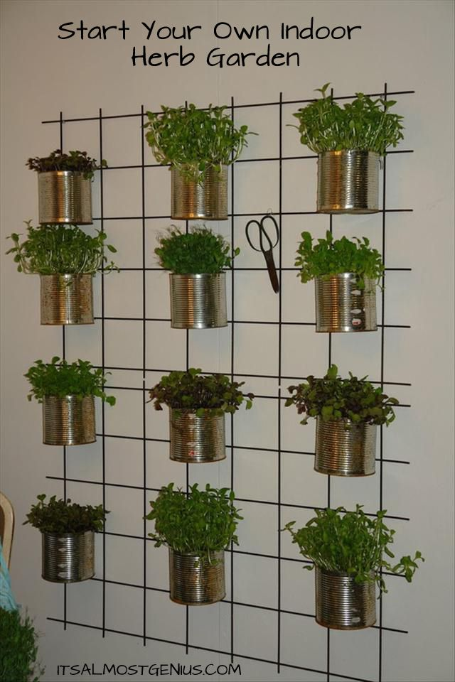 Pinner: Indoor Herb Garden. Herbs are small and easy to grow. I have grown basil in my own house. A small basil plant it perfect for a dorm room. This design would work on the door of closet or a space on the wall. Then you and your room mate could top off your salads with fresh herbs or add herbs to a nice cup of tea.