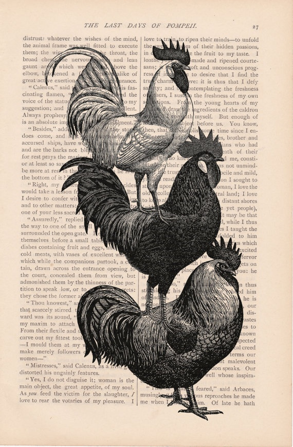 CHICKENS HENS & ROOSTERS print