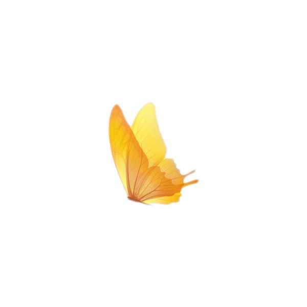 little yellow butterfly ❤