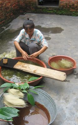 """Farmers in China gather """"prayer leaves"""" which are then washed and processed in a delicate manner  