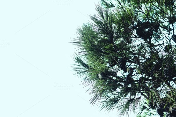 Coniferous by Photo Infusion on @creativemarket