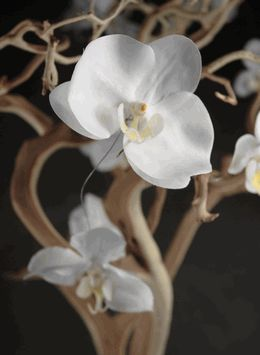 orchids wired to branches