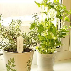17 Best 1000 images about Indoor Gardening on Pinterest Gardens