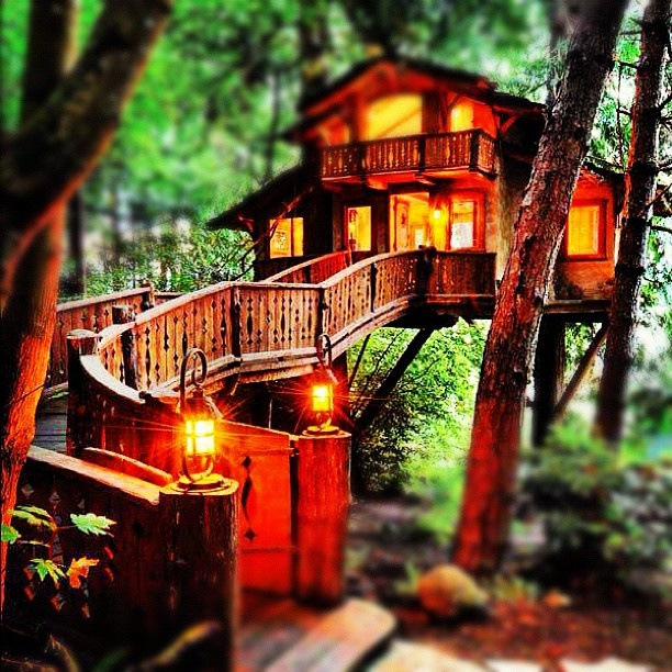 @sarendipitycq | #treehouse #hidden #forest #secluded #safe #peaceful #serenity #lanterns #lig... | Webstagram (ウェブスタグラム) - インスタグラムをパソコンで見れるサービス