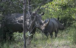 Matobo Hills National Park, about 4 hours from Sable Sands