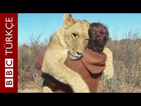 Kafesten kurtardığı yavru aslan ile kurtarıcısının kavuşma anı