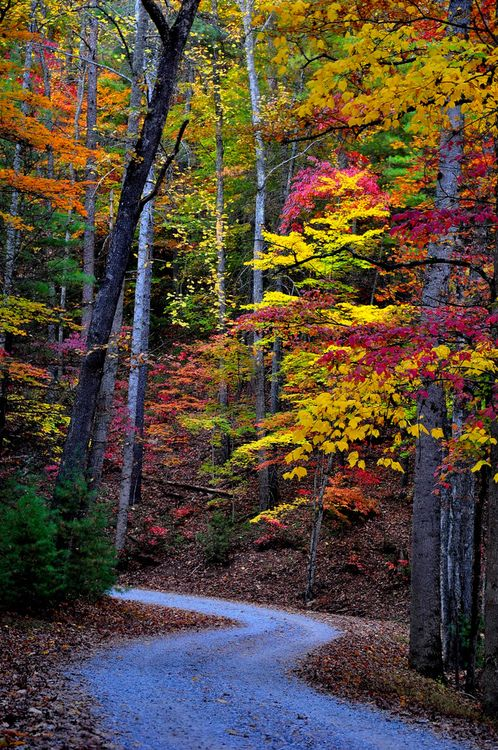 Great Smoky Mountains National Park, Tennessee | USA / by varkala UNESCO World Heritage Site