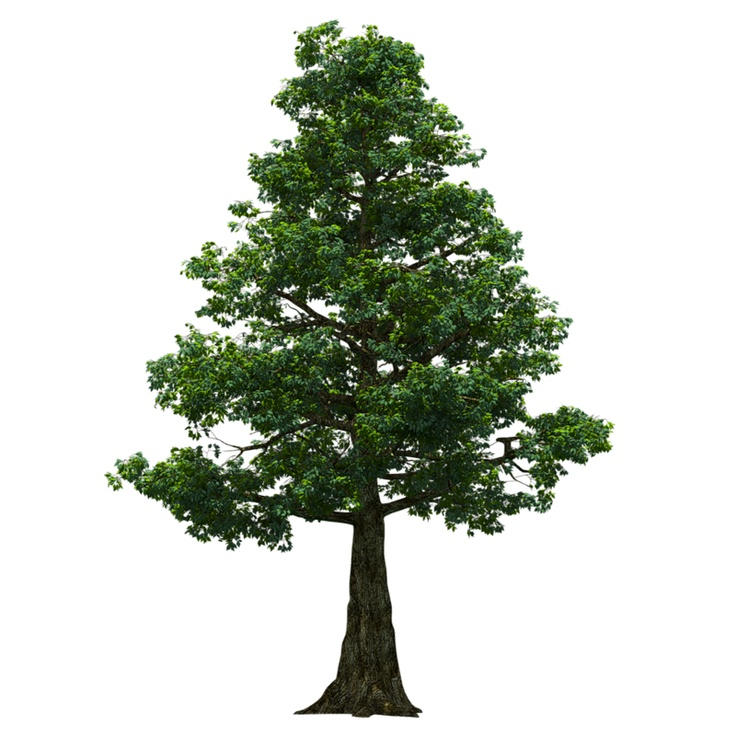 png format. Lots of trees