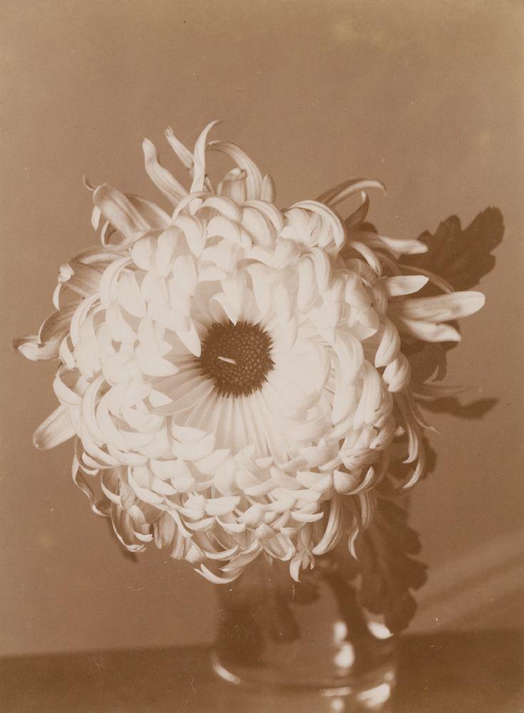 Chrysantheme | Wilhelm Weimar | 1899-1900 | Museum für Kunst und Gewerbe Hamburg | CC0