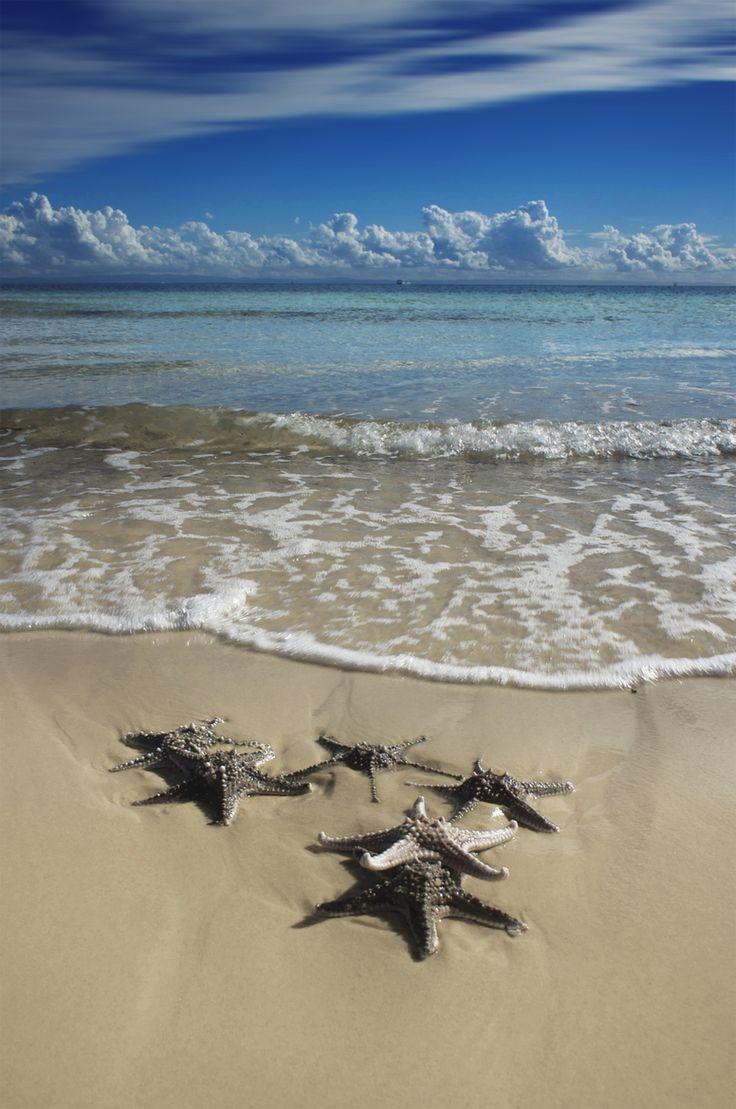 Tangalooma Starfish, Moreton Island, Queensland, Australia by Rhys Pope