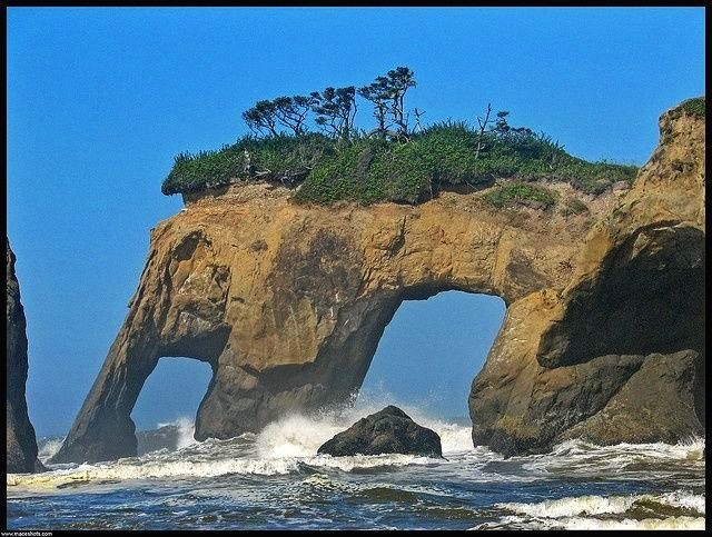 Elephant Rock, Olympic Peninsula, Washington
