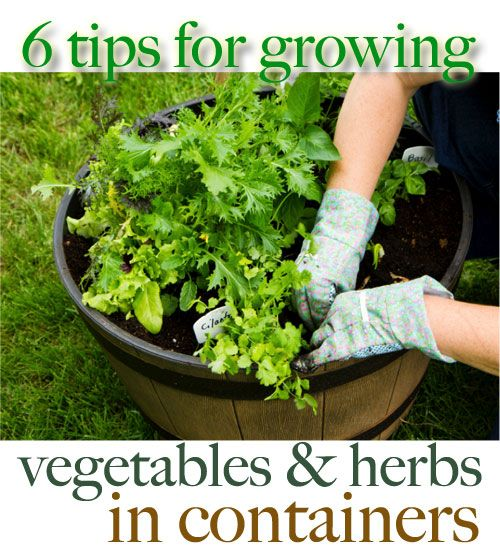 6 Tips for Growing Vegetables and Herbs in Containers  |  FamilyCorner.com®