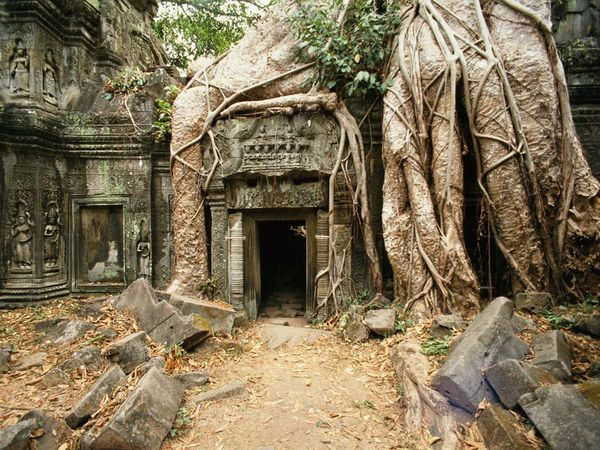 Ta Prohm Temple, Angkor Wat  Photograph by Gray Martin    Giant strangler fig tree roots embrace the crumbling Ta Prohm temple at Angkor. Although the forest has overrun this sacred site, it has largely escaped the looting that decimated many of its fellow Cambodian temples.