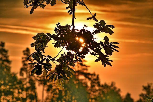 UTRUMQUE: Sluneční toulky v přírodě. Fotograf se dostal vzhů...