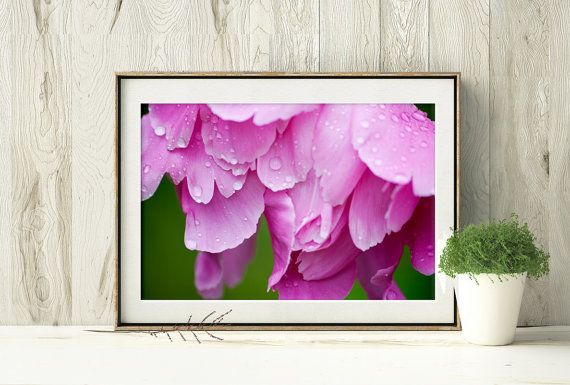 Printable Pink Peony Photograph, Pink Flower with Water Drops by PlayfulPixieStudio  #macrophotograph #flowerphotograph #waterdrops #pinkflower