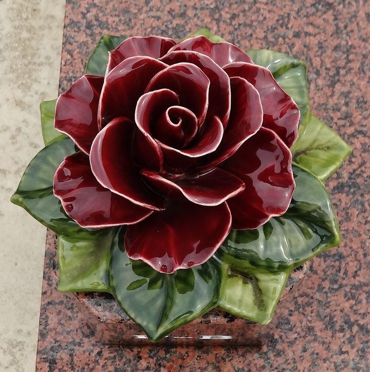 Full Bloom of Red